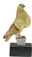 Trofeo Playon Aves