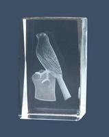 Trofeo de Aves, canario, Lozoya cubo de cristal.